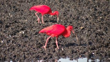 Birdwatching (Observação de Aves)